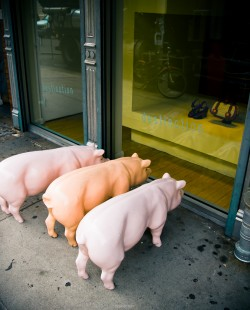 Three Little Piggies Went To Market